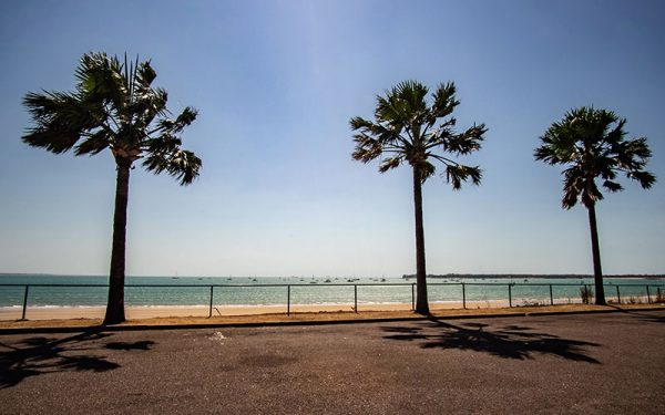 Palm trees along the beachfront in Darwin