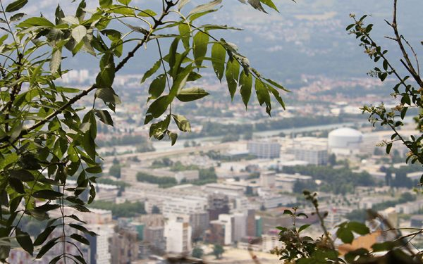 Looking out from the foliage towards Grenoble