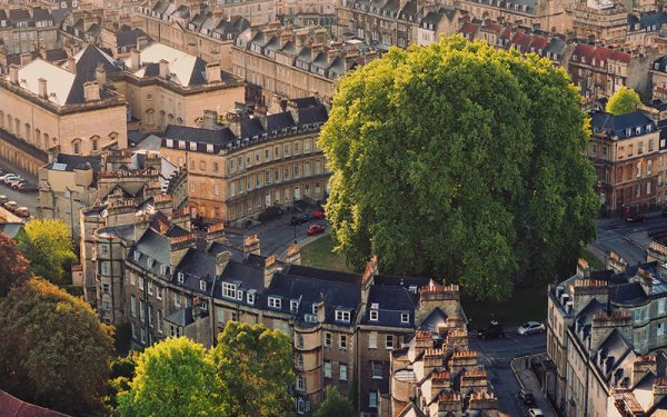 Large tree surrounded by old-looking buildings in Bath